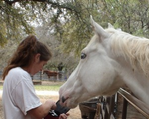 Using Essential Oils For Horses