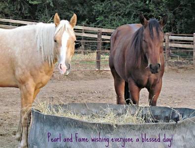 Heavenly Gaits Equine Massage