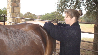 Incorporating essential oils into equine bodywork sessions can enhance your sessions - www.heavenlygaitsequinemassage.com