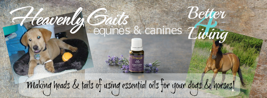 Heavenly Gaits Equines And Canines For Better Living - Learn to use essential oils for your horse's and dog's health