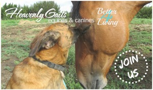 Heavenly Gaits Equines and Canines 4 Better Living essential oil training for dog and horse owners - www.heavenlygaitsequinemassage.com