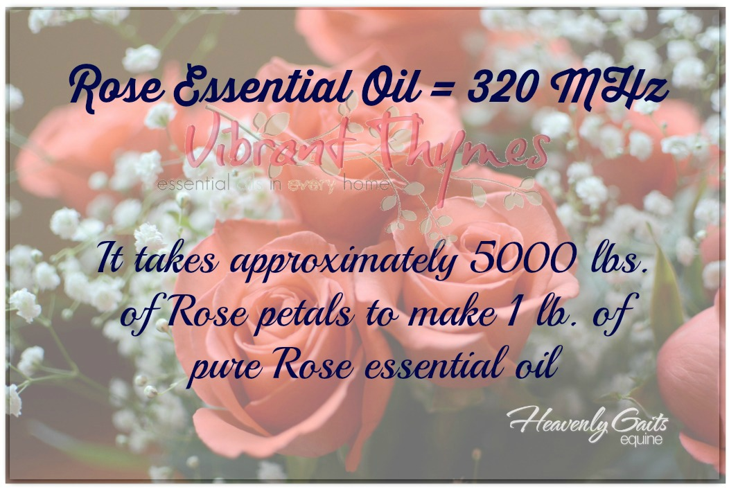 Rose essential oil frequency is the highest of any known substance - www.heavenlygaitsequinemassage.com