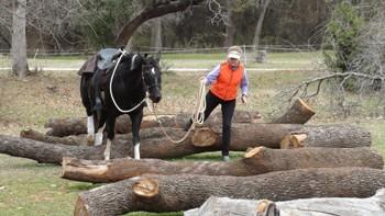 Simulating fallen trees on the trail - www.heavenlygaitsequinemassage.com