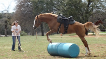 Teach your horse to freely jump over objects to prep for trail riding - www.heavenlygaitsequinemassage.com