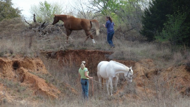 Allow your horse to experience different terrain and become comfortable with going up and down hills - www.heavenlygaitsequinemassage.com