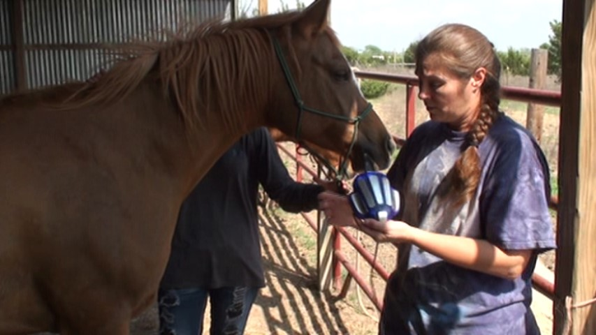Using the Zyto Compass on a horse - www.heavenlygaitsequinemassage.com