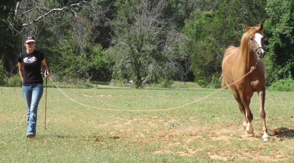 """Supporting your horse through the equine """"back to school"""" season - www.heavenlygaitsequinemassage.com"""