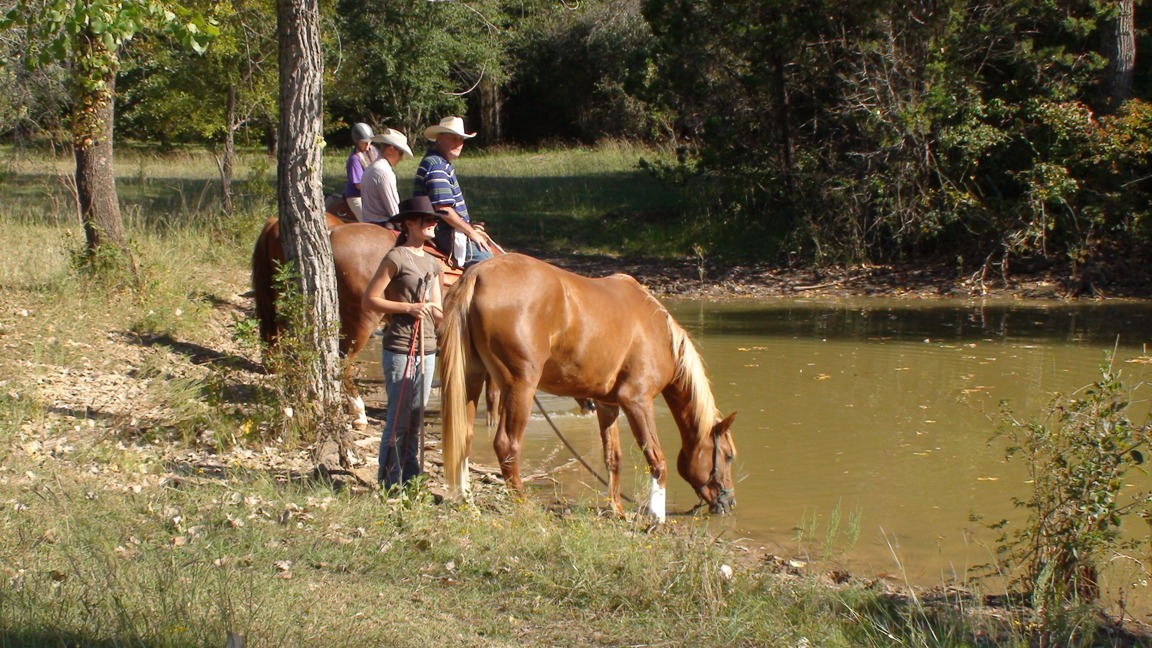 "Horses drink water from pond - ""You can lead a horse to water, but you can't make it drink"""