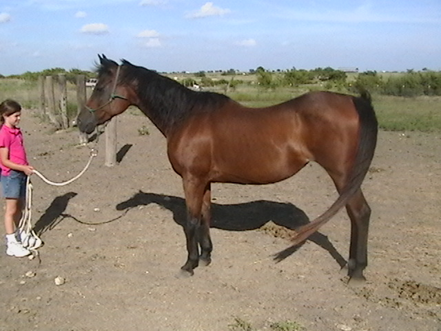 Addressing weight loss in the horse - www.heavenlygaitsequinemassage.com