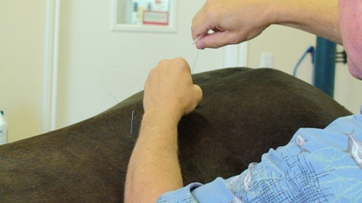 Acupuncture and equine bodywork can help ease horse muscle tension in the horse - www.heavenlygaitsequinemassage.com