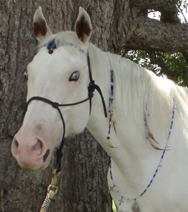 Handmade blue rhythm beads for your horse - www.heavenlygaitsequinemassage.com