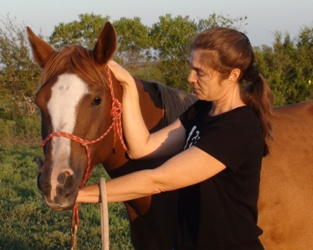 Asking for lateral flexion isolating the joint at C1 and C2 - Heavenly Gaits Equine Massage