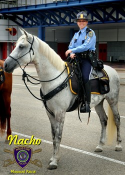 Rehabilitated horses populate many police departments throughout the United States - www.heavenlygaitsequinemassage.com