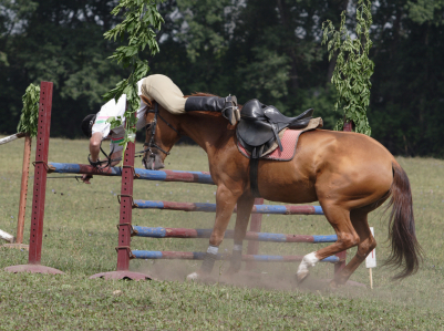 If the horse doesn't like his job, the rider has no joy - rider falls off horse - www.heavenlygaitsequinemassage.com