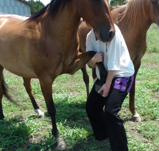 Incorporating equine bodywork is an integral part of any horse rehabilitation plan - Heavenly Gaits Equine Massage